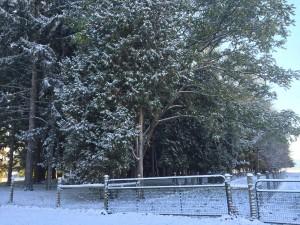Snow 5