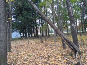 Broken Tree Partially Standing.
