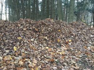 Leaf Compost Pile