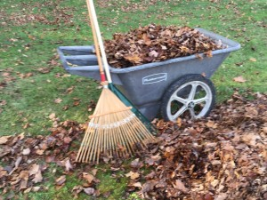 Raking the Leaves