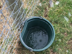 Water bucket with ice fragments.