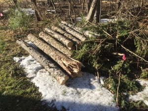 Pile of logs from the downed tree.