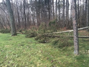 Two trees down during a winter storm.