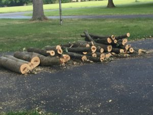 Pile of cut logs on the driveway.
